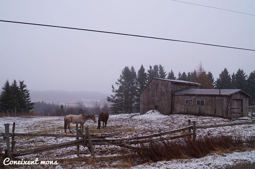 Neu sobre els camps i granges - New Brunswick