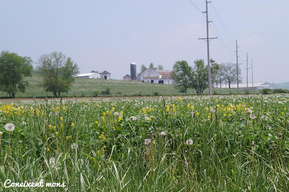 Llumenetes sobre els camps de Charm - Ohio
