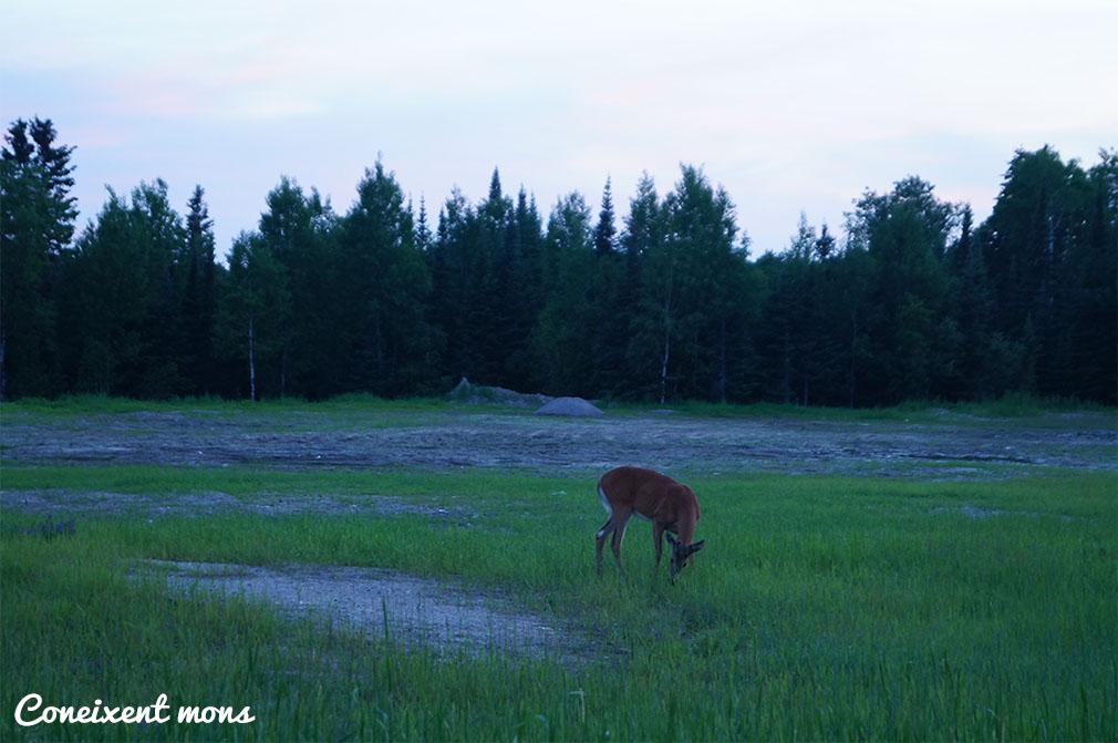 Observant des de la finestra al capvespre - Dryden - Ontario