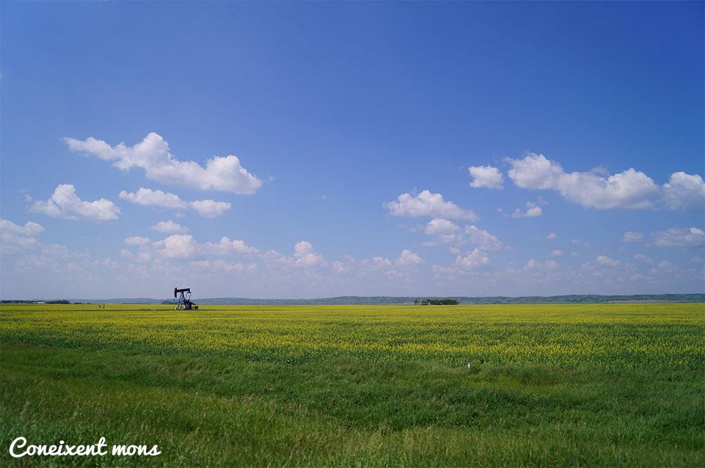 Camps de colza - Saskatchewan