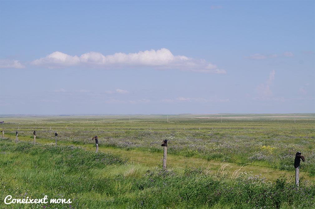 Algú ha perdut les botes! - Grasslands National Park - Saskatchewan