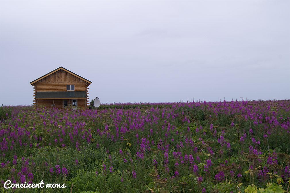 Casa tradicional - Alaska