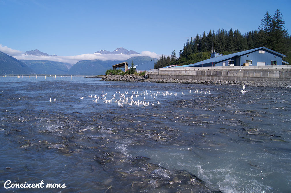Valdez - Alaska