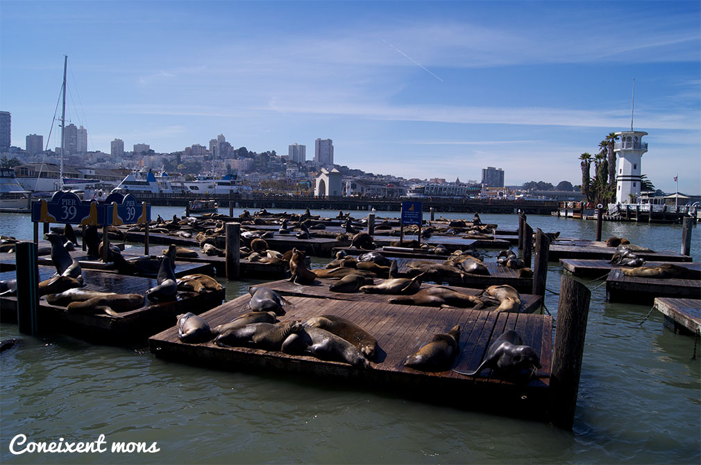 Colònia de lleons marins - San Francisco - California