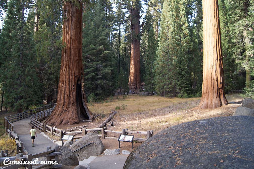 Al fons, el General Sherman, un sequoia de 84 metres d'alçada i amb un diàmetre de 31 metres. Bat el record mundial de volum. Només pesa 2.000 tones!