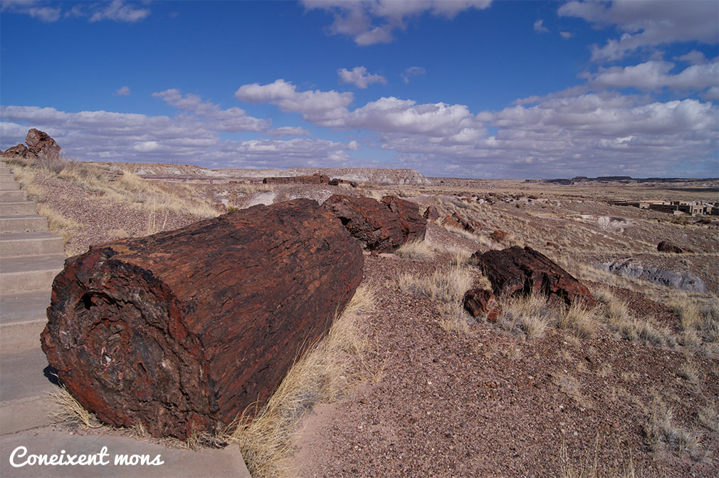 Petrified Forest National Park - Arizona
