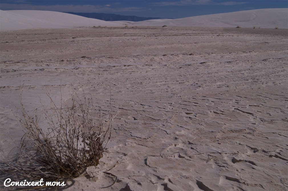 White Sands National Park - New Mexico