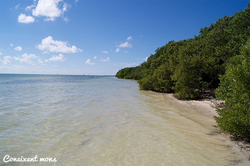 Anne's Beach - Islamorada - Florida