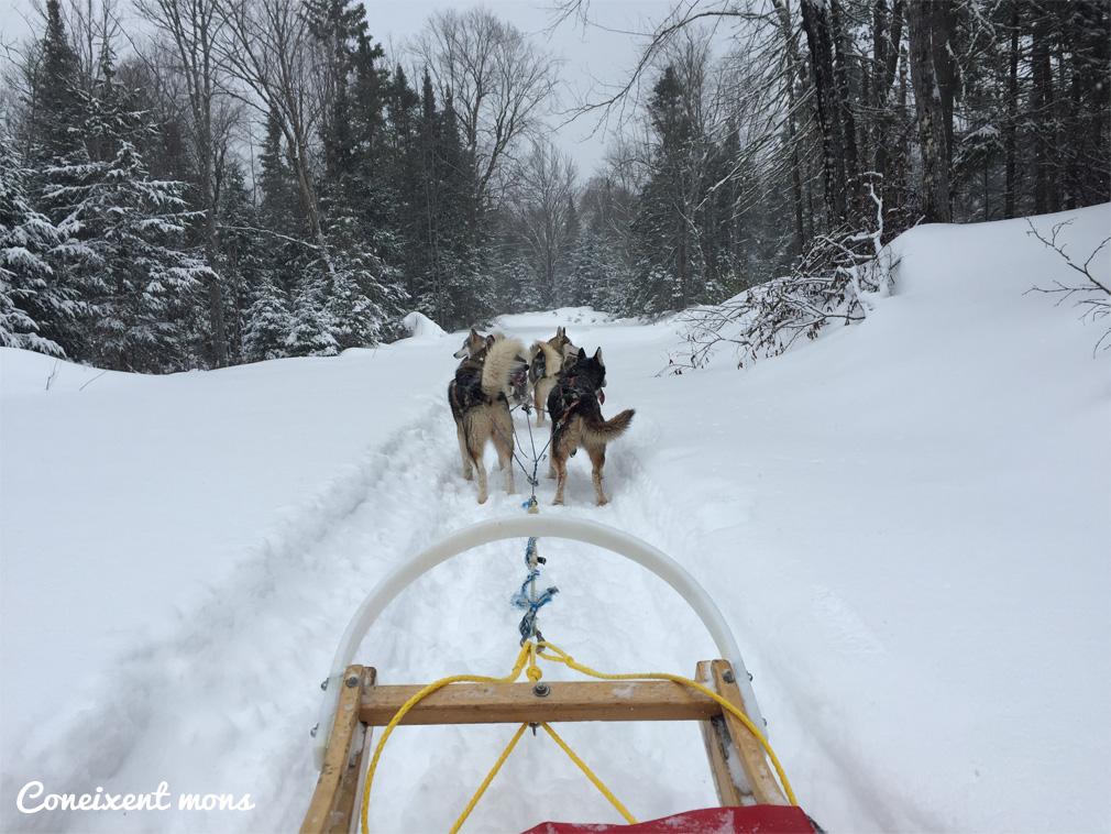 Múixing, una expedició en trineu a la reserva Papineau-Labelle