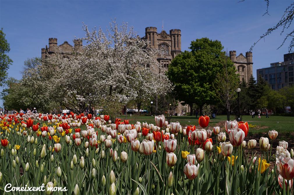 De fam, princeses i tulipes