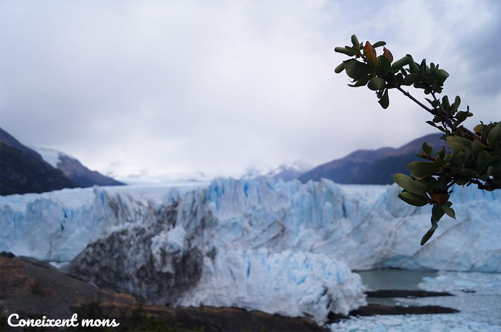 El Perito Moreno, un tità de gel